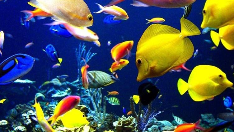 К чему снится рыба живая и большая