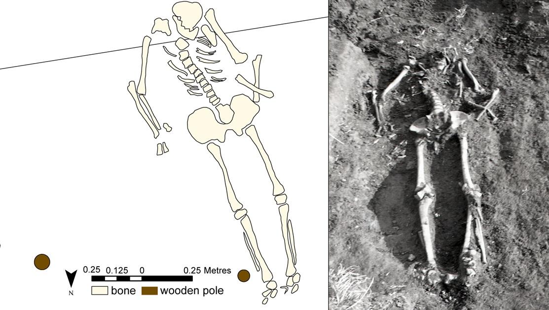 Tamula XIV matus, mille selja taha oli algselt paigutatud orgaanilisest materjalist kõrgendus. Ehkki see on aastatuhandetega pinnases täielikult hävinenud, viitavad selle olemasolule roiete ja kolju asend koos küünarnukist kõverdatud kätega.